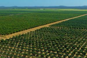 A obra contempla a ampliação, melhoramento e modernização do sistema de irrigação.